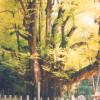 菩提寺の大銀杏